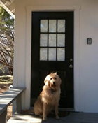 pet-friendly-vacation-rentals
